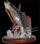 Brook Trout Taxidermy Mount For Sale