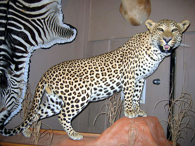 All Game Taxidermy New Jersey S Premier Taxidermist